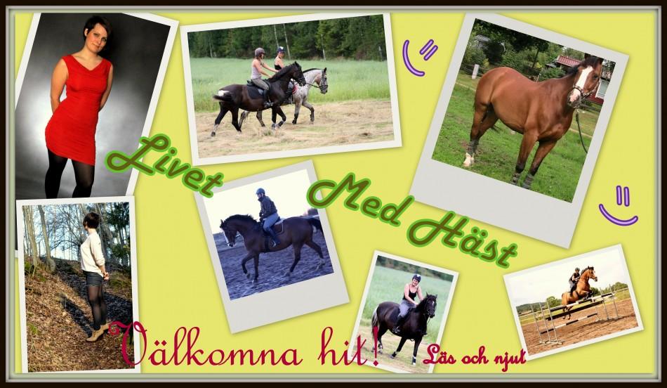 Mitt Liv med Häst